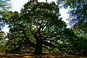 Tree Lines Digital Art Prints - Angel Oak Tree 2004 Print by Louis Dallara