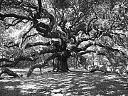 Black And White Digital Art Framed Prints - Angel Oak Tree Black and White Framed Print by Melanie Snipes