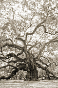 Angel Prints - Angel Oak Tree Charleston SC Print by Dustin K Ryan
