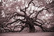 Oak Tree Framed Prints - Angel Oak Tree Framed Print by Dustin K Ryan