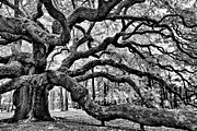 Angel Oak Posters - Angel Oak Tree IR HDR Poster by Louis Dallara