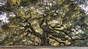 Living Tree Framed Prints - Angel Oak Tree Live Oak  Framed Print by Dustin K Ryan