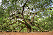 Angel Oak Photos - Angel Oak Tree of Life by Dustin K Ryan