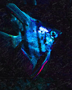 Angelfish Print by Wingsdomain Art and Photography