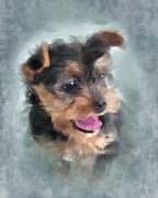 Yorkshire Terrier Posters - Angelic Poster by Betty LaRue