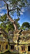 Angkor Wat And Tree Print by Louise Fahy