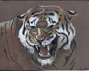 Exotic Drawings - Angry Tiger by Adam  Wallander