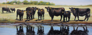 Cattle Painting Prints - Angus Reflections Print by Toni Grote