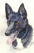 Kelpie Paintings - Anguss Dog by Sandra Phryce-Jones