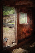 Hello Photo Acrylic Prints - Animal - Lamb - Hello anybody home Acrylic Print by Mike Savad