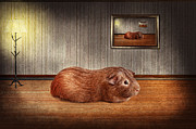 Hairs Framed Prints - Animal - The guinea pig Framed Print by Mike Savad