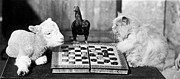 Animal Games Prints - Animal Draughts Print by Fox Photos