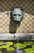 Lilly Pad Photos - Animal Fountain Head by Teresa Mucha