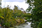 Wdw Prints - Animal Kingdom Print by Carol  Bradley - Double B Photography