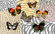 Zebra Butterfly Acrylic Prints - Animal Print Acrylic Print by Lauranns Etab