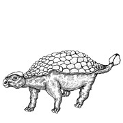 Black Pen Work Prints - Ankylosaurus - Dinosaur Print by Karl Addison