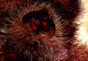 Hawaiian Food Photos - Annatto by James Temple