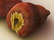 Natural Food Prints - Annatto Seed, Sem Print by Power And Syred