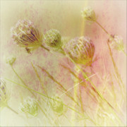 Queen Annes Lace Prints - Annies Lace Print by Bonnie Bruno