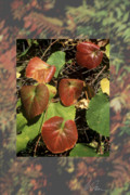 Grape Leaves Posters - Annies Legacy Fall Grape Leaves Poster by Charlie Osborn