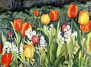Flower Bed Prints - Anns Tulips Print by Barbara Jewell