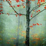 Fall Foliage Prints - Another Day Another Fairytale Print by Katya Horner