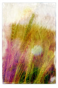 Judi Bagewll Prints - Another Field of Dreams Print by Judi Bagwell