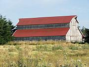Farms Pyrography Prints - Another Northwest Barn Of Washington Print by Laurie Kidd
