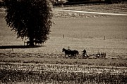 Amish Farmer Photos - Another Time by Eric Tressler