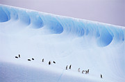People On Ice Photos - Antarctica, South Orkney Islands, Chinstrap Penguins On Iceberg by Kevin Schafer
