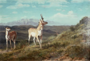 Mountainous Paintings - Antelope by Albert Bierstadt
