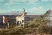 Antelope Print by Albert Bierstadt