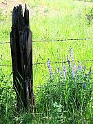 Barbed Wire Fence Framed Prints - Antique Fence Post Framed Print by Will Borden