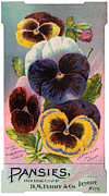 Abundance Digital Art Posters - Antique Image Of Pansies Seed Packet Poster by Circa
