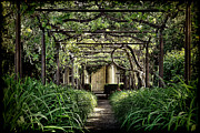 Trellis Framed Prints - Antique Pergola Arbor Framed Print by Olivier Le Queinec