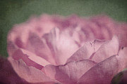 Textured Floral Framed Prints - Antique Pink Framed Print by Aimelle