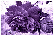 Purple Roses Prints - Antique Purple Rose Flower with Texture Print by Marina Bobrovnik