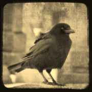 Animal Canvas Digital Art - Antique sepia Crow by Gothicolors And Crows
