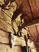 Cabin Wall Photos - Antler Collection On Wall by Granefelt, Lena