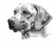 Pet Drawing Drawings Posters - Anton Poster by Sheona Hamilton-Grant