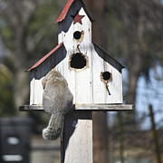 Bushy Tail Photos - Anyone Home by Teresa Mucha