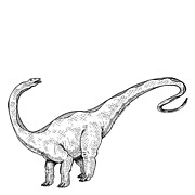 Black Pen Work Prints - Apatosaurus - Dinosaur Print by Karl Addison