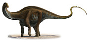 Apatosaurus Excelsus, A Prehistoric Era Print by Sergey Krasovskiy