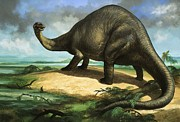 Dinosaurs Painting Posters - Apatosaurus Poster by William Francis Phillipps