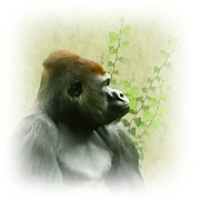 Gorilla Digital Art Metal Prints - Ape Metal Print by Sharon Lisa Clarke