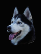 Siberian Husky Digital Art - Apollo by Julie L Hoddinott