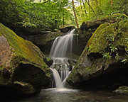 Appalachian Mountain Creek Print by Ulrich Burkhalter
