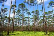 Barbara Bowen - Appalachicola National Forest
