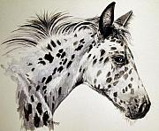 Horse Artwork Prints - Appaloosa Print by Keran Sunaski Gilmore