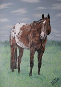 Melita Safran Framed Prints - Appaloosa Framed Print by Melita Safran